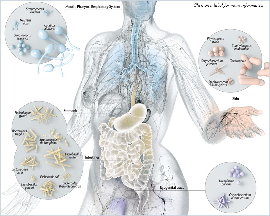 Microbiome Picture