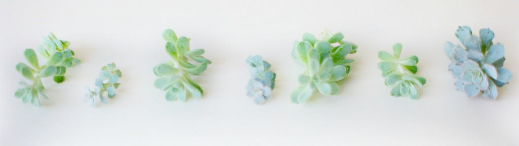 Cropped Succulent Image